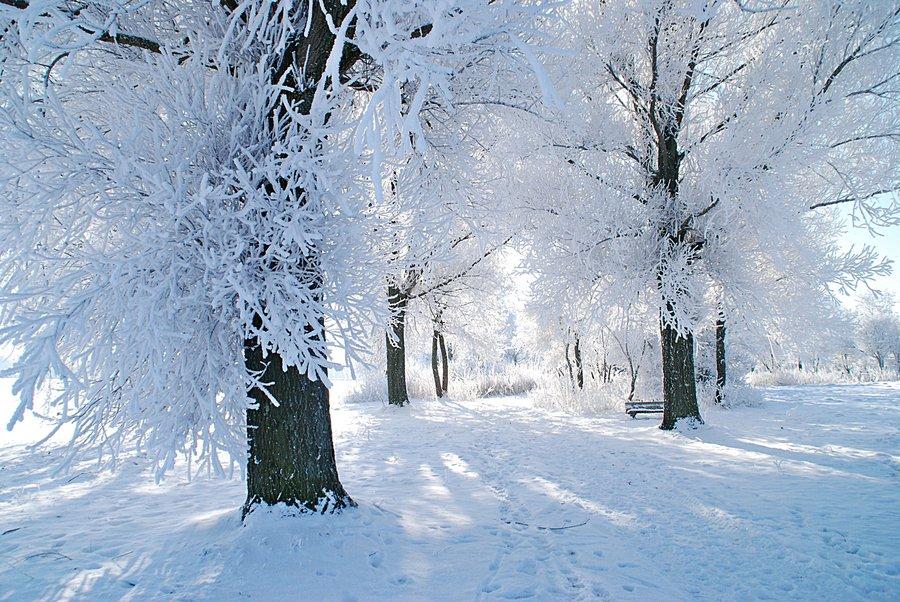 Winter_trees_by_glyceria-d4oqg1g